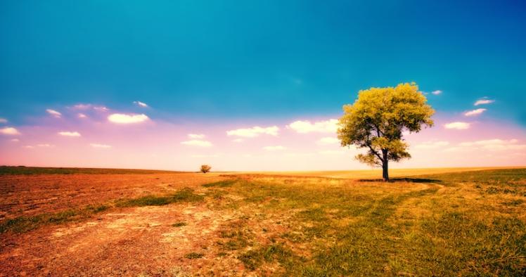 Alone tree in the field